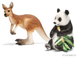 Schleich Wild Life - Känguru, Krokodil, Aligator, Panda