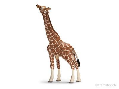 Schleich Giraffenbulle, fressend